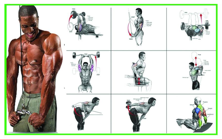 Sơ đồ các nhóm cơ chính trên cơ thể trong tập gym
